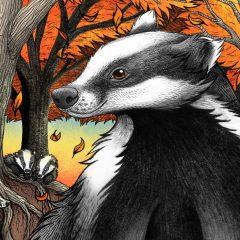Badgers At Fall