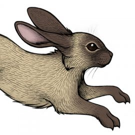 Sable Rabbit Tattoo