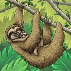 Three-Toed Sloths