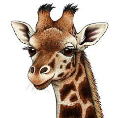 Rothschild's Giraffe