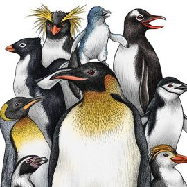 Penguin Obsession