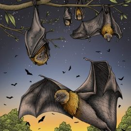 Rodrigues Fruit Bats