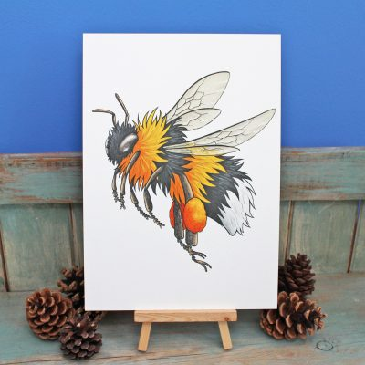 Bumblebee Illustration – A3 Print