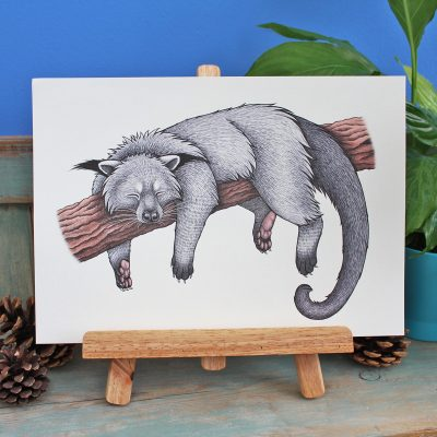Binturong Illustration – A3 Print