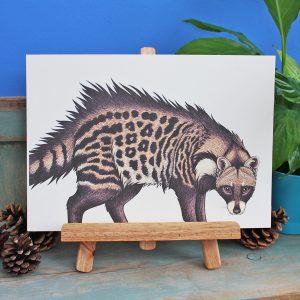 African Civet Illustration – A4 Print