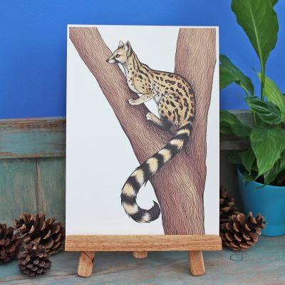 Genet Illustration – A4 Print