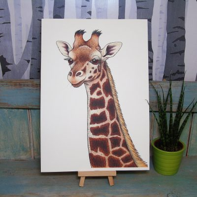 Rothschild's Giraffe Illustration – A3 Print