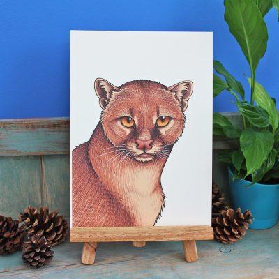 Jaguarundi Illustration – A4 Print