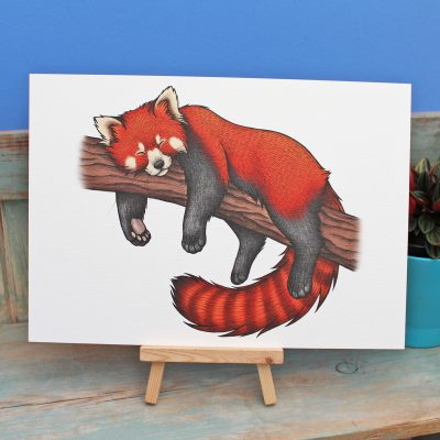 Red Panda Illustration – A3 Print