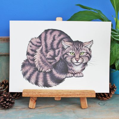 Scottish Wildcat Illustration – A3 Print