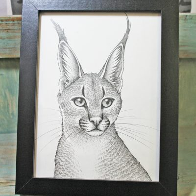 Caracal Framed Original Pencil Drawing