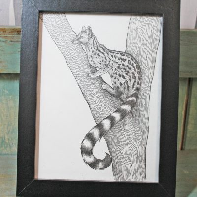 Genet Original Pencil Drawing