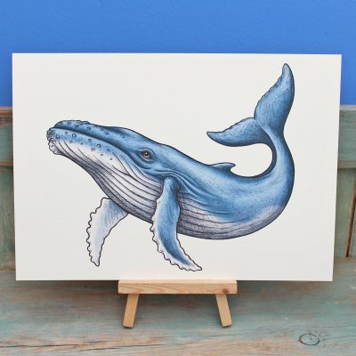 Humpback Whale Illustration – A4 Print