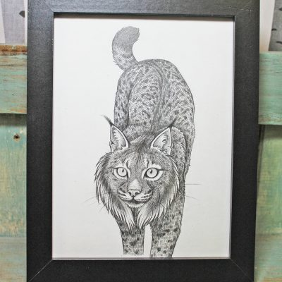 Iberian Lynx Original Pencil Drawing