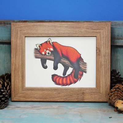 Red Panda Illustration Framed Mini Print