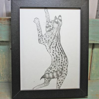 Serval Framed Original Pencil Drawing