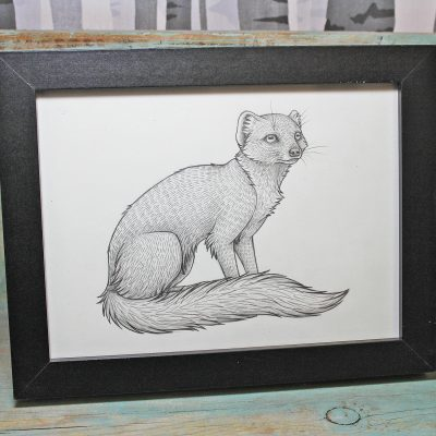 Yellow Mongoose Framed Original Pencil Drawing